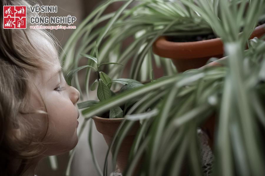 trồng cây trong nhà tạo mùi thơm